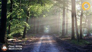 [6시간] 만병을 치유하는 숲속치유음악,과 숲속영상, 힐링주파수포함,산새소리,기치료음악,10분기치료명상음악