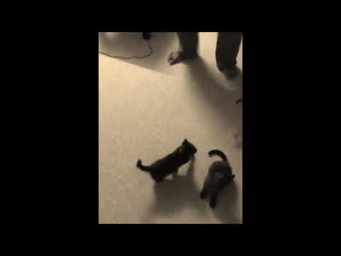 sweet cats and dog vs grape
