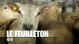 Dans les coulisses du marché aux bestiaux de Sancoins : le côté financier
