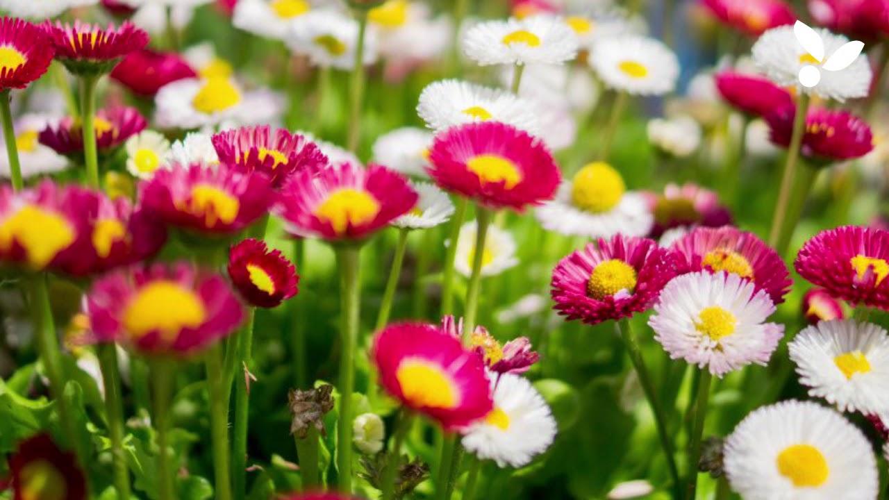 Flora flora flora