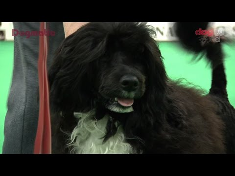 Birmingham National Dog Show 2016 - Working Puppy group