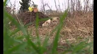 China Grieving Dog Guards the Grave Of Its Dead Owner