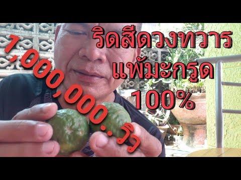 รักษาริดสีดวงทวารด้วยมะกรูดแบบง่ายๆภายใน3วัน..100%