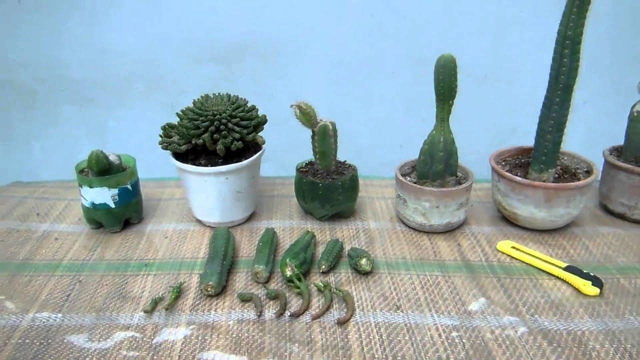Siembra y arreglo de cactus youtube for Como plantar cactus