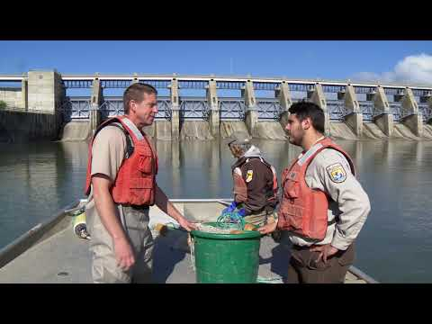 Conservation Connect Series:  Paddlefish