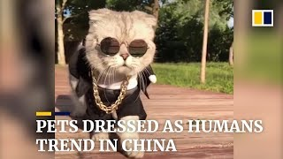 Pets dressing as humans take Chinese social media by storm