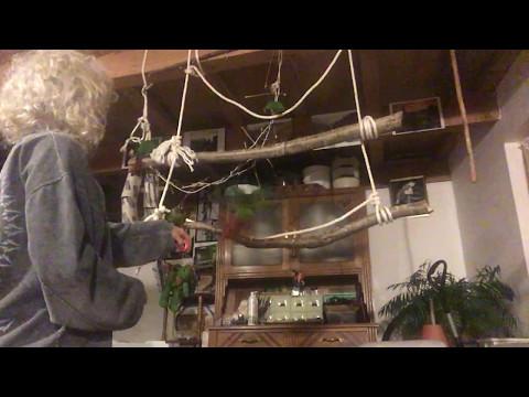 Training des bébés Pyrrhura Molinae – 3ème extrait
