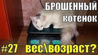 Брошенный котенок#27  ЧЕМ КОРМИТЬ КОТЕНКА В 5 МЕСЯЦЕВ Спасение бездомного котенка