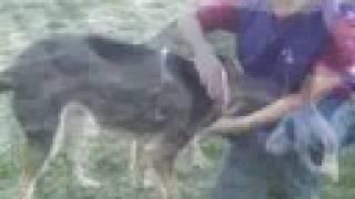 *adopted* Wednesday 6071461 Humane Society Colorado Adopt