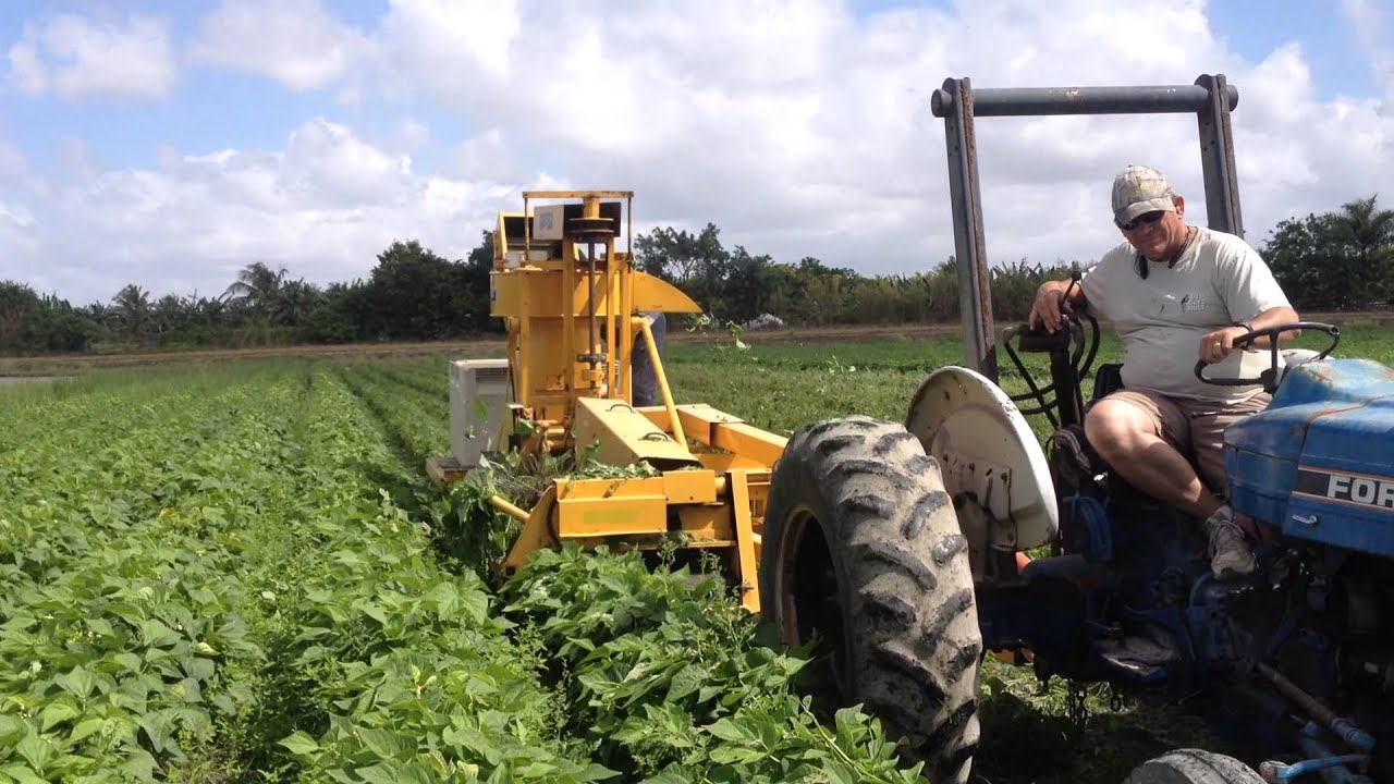 OXBO/Pixall BH100 Green Bean Harvester - YouTube