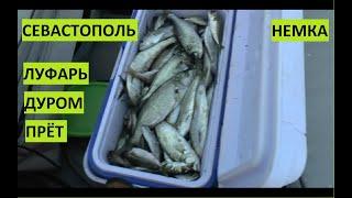Рыбалка Черное море Севастополь Луфарь прет Мегаволна