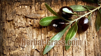 Экстракт плодов пальмы ползучей уменьшает отек и обструкцию в перигландулярной, собственно стромальной и железистой тканях предстательной железы. Увеличивает активность в ткани предстательной железы фермента 3α-гидроксистероид-оксидоредуктазы (3α-hsor), участвующего в.