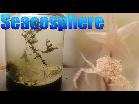 Huge Natural Saltwater Ecosphere - Starfish, crabs and a lot