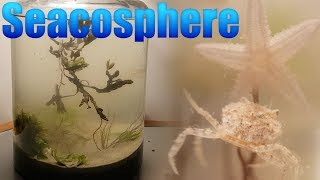 Huge Natural Saltwater Ecosphere - Starfish, crabs and a lot more...
