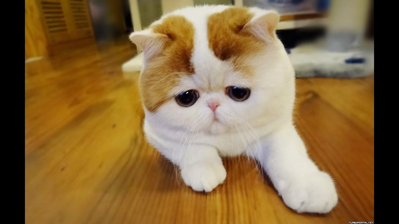 коты фото видео