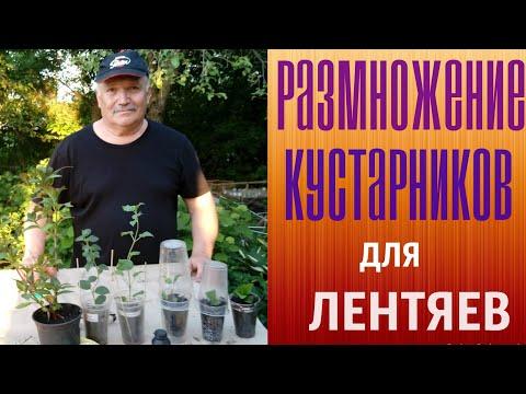 Вопрос: Как размножить ваши растения?