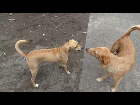 dogs language   Welpengruppen