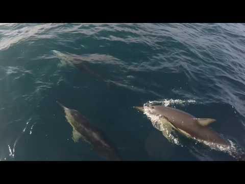 Call Of The Dolphin - Ken Davis  Sydney Australia