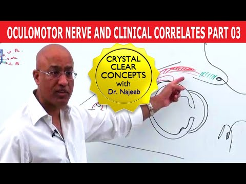 Oculomotor Nerve and Clinical Correlates Part 3