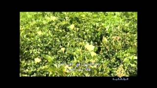 الجزيرة الوثائقية :  فيلم للمخرج رشيد قاسمي على ضفاف نهر السنغال