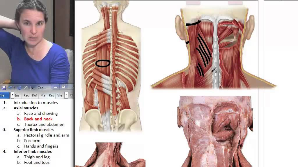 Back Neck Muscles Human Anatomy Course Youtube