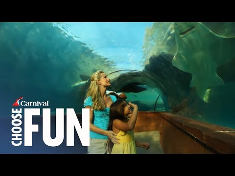 Discover Atlantis in Nassau, Bahamas | Carnival Shore Excursions