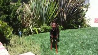 Doberman Obstacle Course