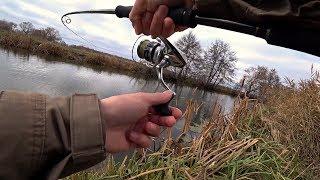 Охренеть сколько РЫБЫ здесь в этой маленькой речке?!! Рыбалка на спиннинг.