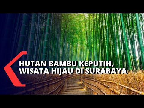 nikmati-wisata-hijau,-hutan-bambu-keputih-di-surabaya