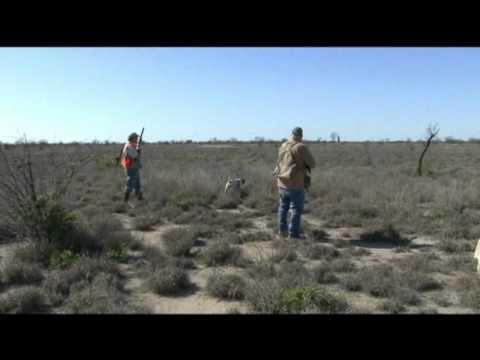 LSSTA - Upland Birds-South Texas