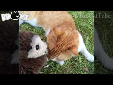 ✔ Funny Cats Compilation 2016   Best Funny Cat Videos #4