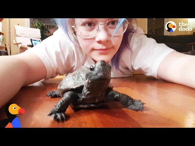 Playful Turtle Follows His BFF Mom Like a Dog   The Dodo