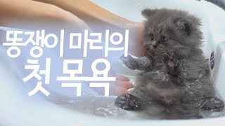 새끼고양이의 첫 목욕~♥ 아구 얌전해라