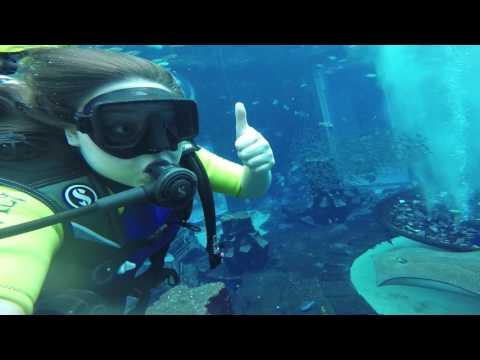 Atlantis Dubai - Dive Discovery - Lost Chambers Aquarium, The Palm
