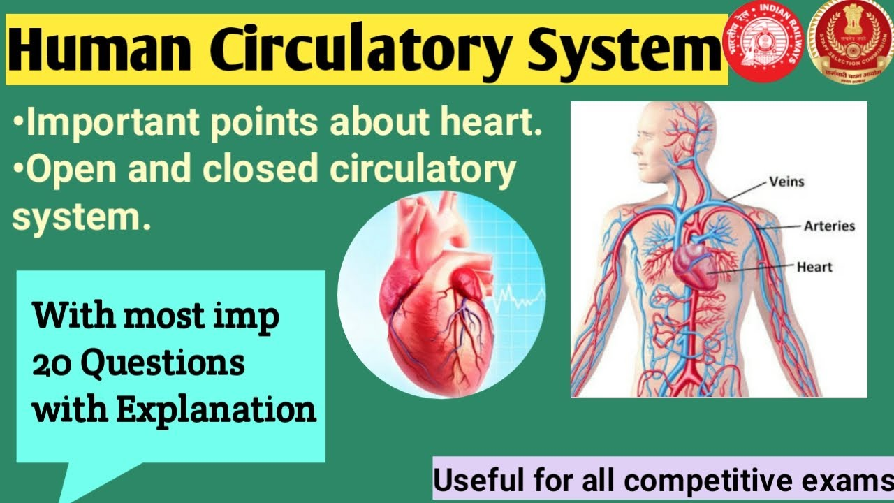 Ssc Science  Questions On Human Circulatory System  Open