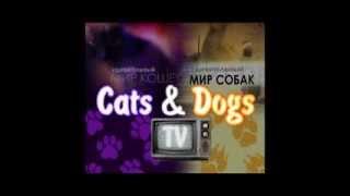 Канал Cats&DogsTV  - КОШКИ +  СОБАКИ / CATS + DOGS
