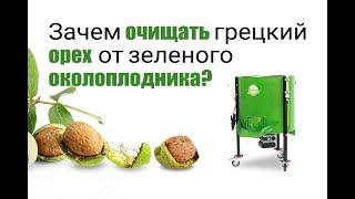 Зачем мыть зеленый грецкий орех? Очиститель ореха от зеленого околоплодника 500кг/час.