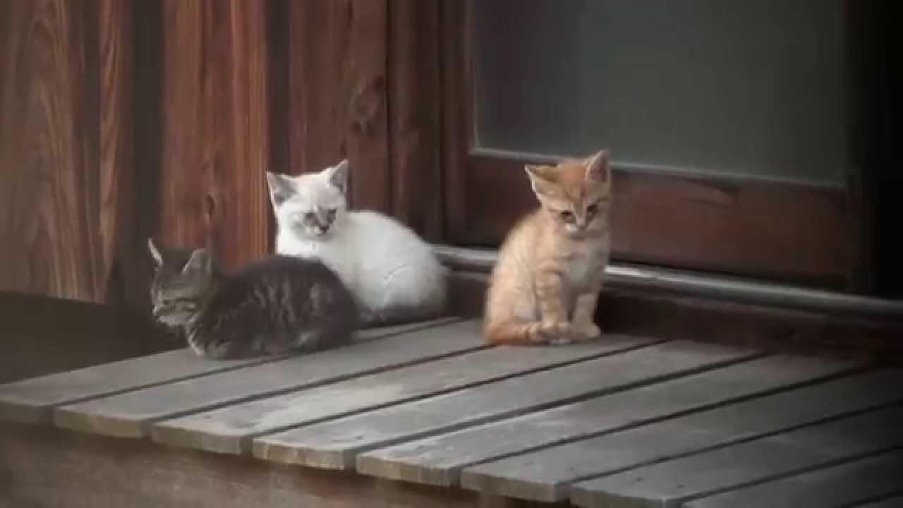 親子 野良猫