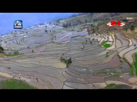 Stunning rice terraces in Yuanyang County, south China
