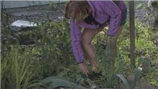 Edible Gardening : How to Get Rid of Weeds Naturally