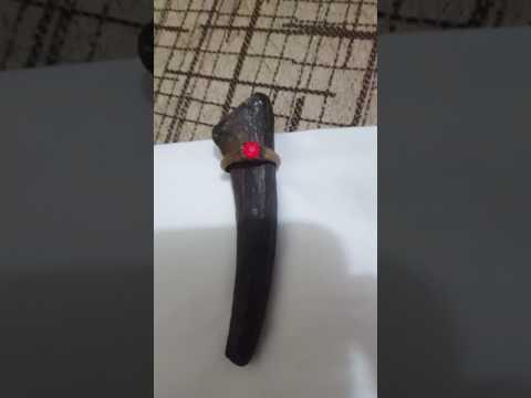 Cincin Merah delima dan fosil tanduk?