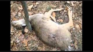 United Bowhunters of New Jersey leave carnage and bloodshed in 09