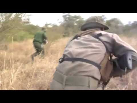 Curbing Poaching: Anti-Poaching Efforts Gain Momentum In S.Africa