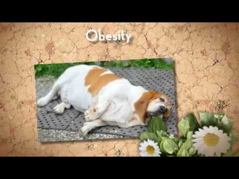 what are signs of diabetes in dogs | diabetes in dogs |diabetes symptoms in dogs | blindness