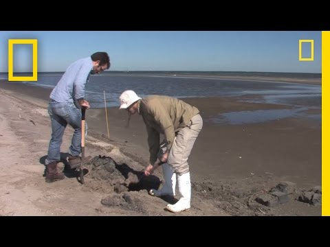 exxon-valdez-lessons-applied-in-gulf-coast-cleanup- -national-geographic