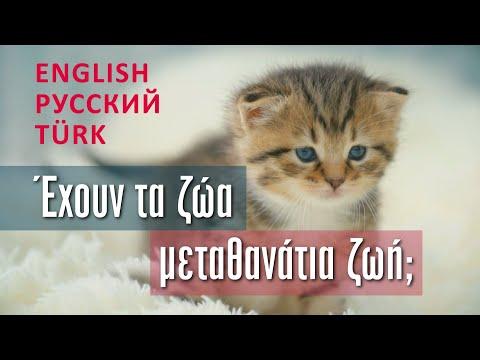 Έχουν τα ζώα μεταθανάτια ζωή; - π. Αθανάσιος Μυτιληναίος