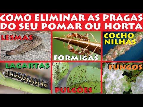 Como Eliminar Lagartas, Lesmas, Formigas, Fungos e Pulgões facilmente do Seu Pomar ou Horta!