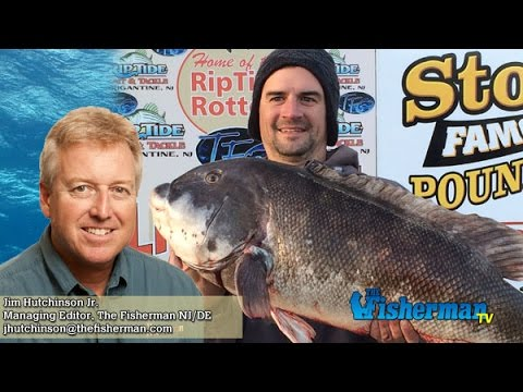 January 7 2016 new jersey delaware bay fishing report for Delaware bay fishing report