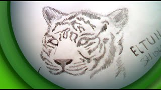 DRAW TIGER | ТИГР КАРАНДАШОМ(DRAW TIGER | ТИГР КАРАНДАШОМ как нарисовать тигра how to draw a tiger рисовать тигра карандашом pencil draw a tiger., 2015-12-06T19:07:34.000Z)