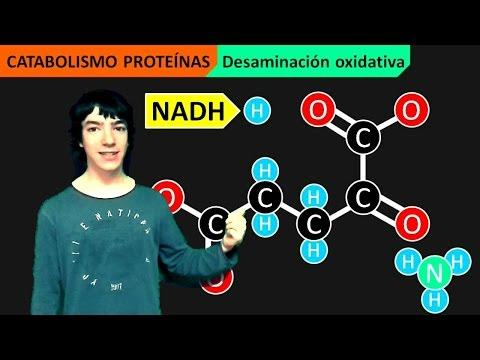 Metabolismo proteico yahoo dating